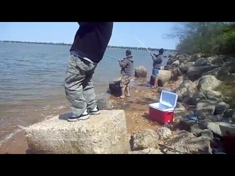 Norfolk VA. Fishing.4 Drums In Less Than 2 Minutes.