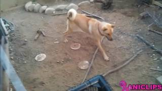 Cats And Dogs Scared Of Random Things ✯ Funny Animal Compilation   PetsFunny
