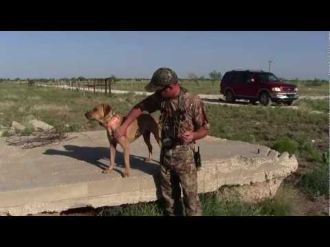 Predator University TV - Episode 2 (Intro To Coyote Decoy Dogs)