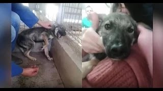 Abused dog is stroked for the first time [ Must Watch ]