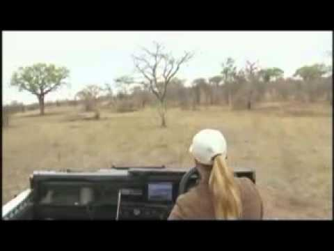 AM Safari Drive - Tiny Baby Elephant - Karula - Oct 17, 2011