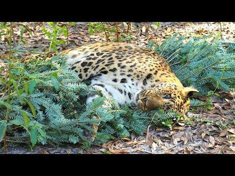 Big Cat Christmas Sing Along
