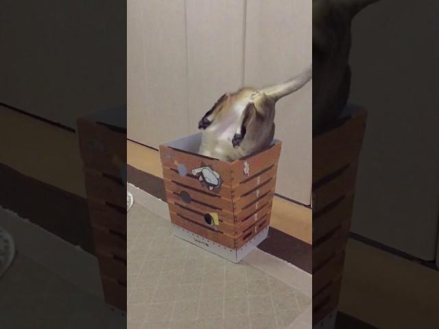 跳び箱を逆さまに飛ぶ猫