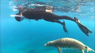 Curious (& Playful) Playful Hawaiian Monk Seal meets Linn from Sweden