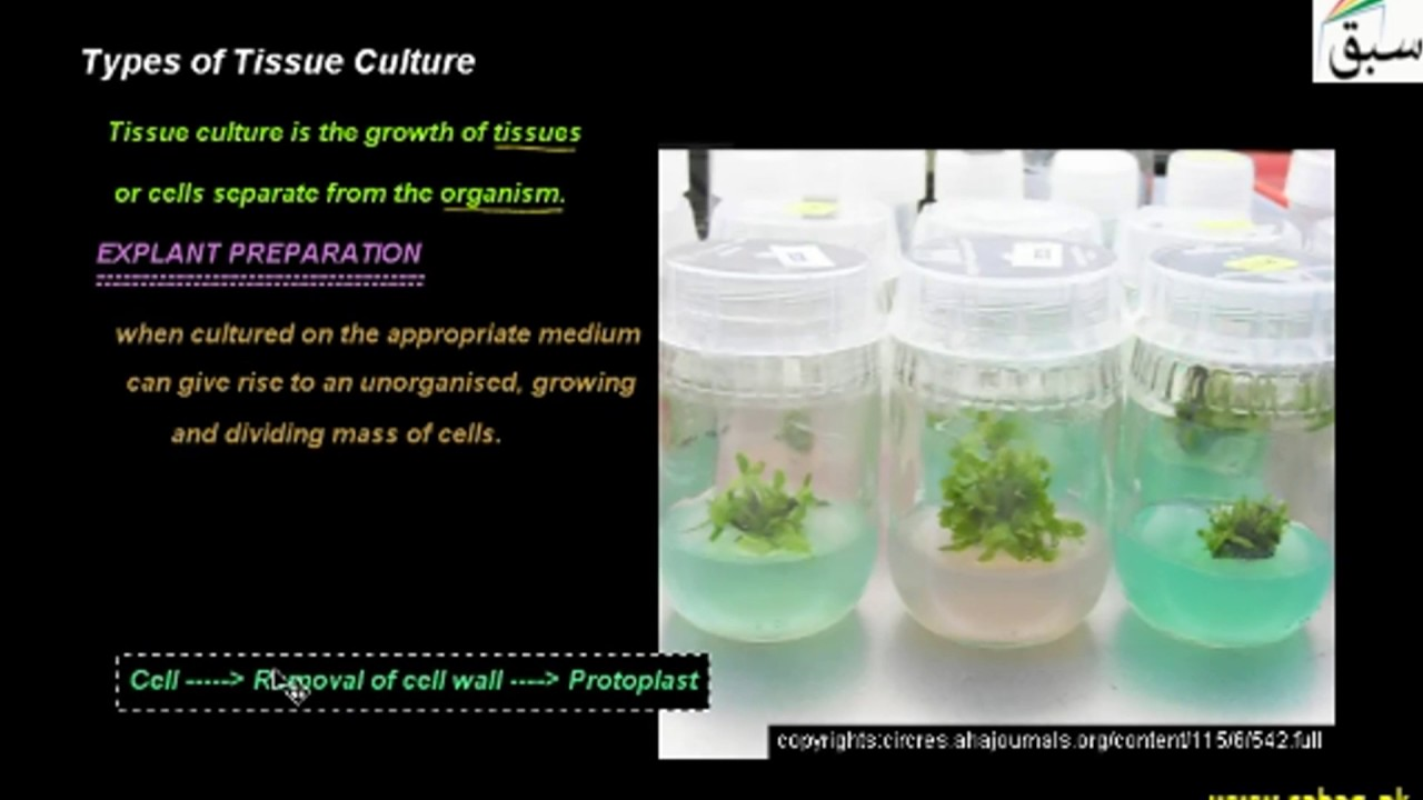Types of Tissue Culture