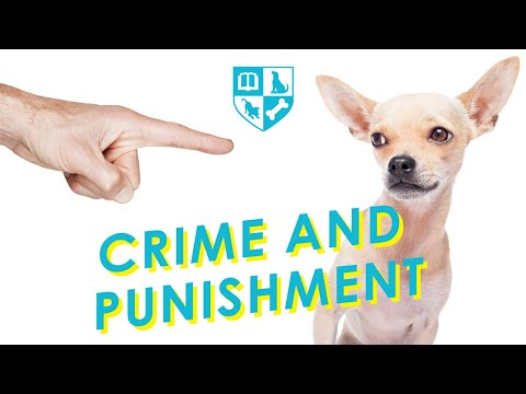Why Punishing Your Dog is Ineffective and Sometimes Harmful