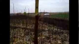 видео Древесница въедливая