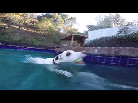 Adorable Dog Swimming in the Pool - Our Dogs Are Awesome
