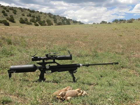 2nd Airgun Prairie Dog Hunt in Arizona