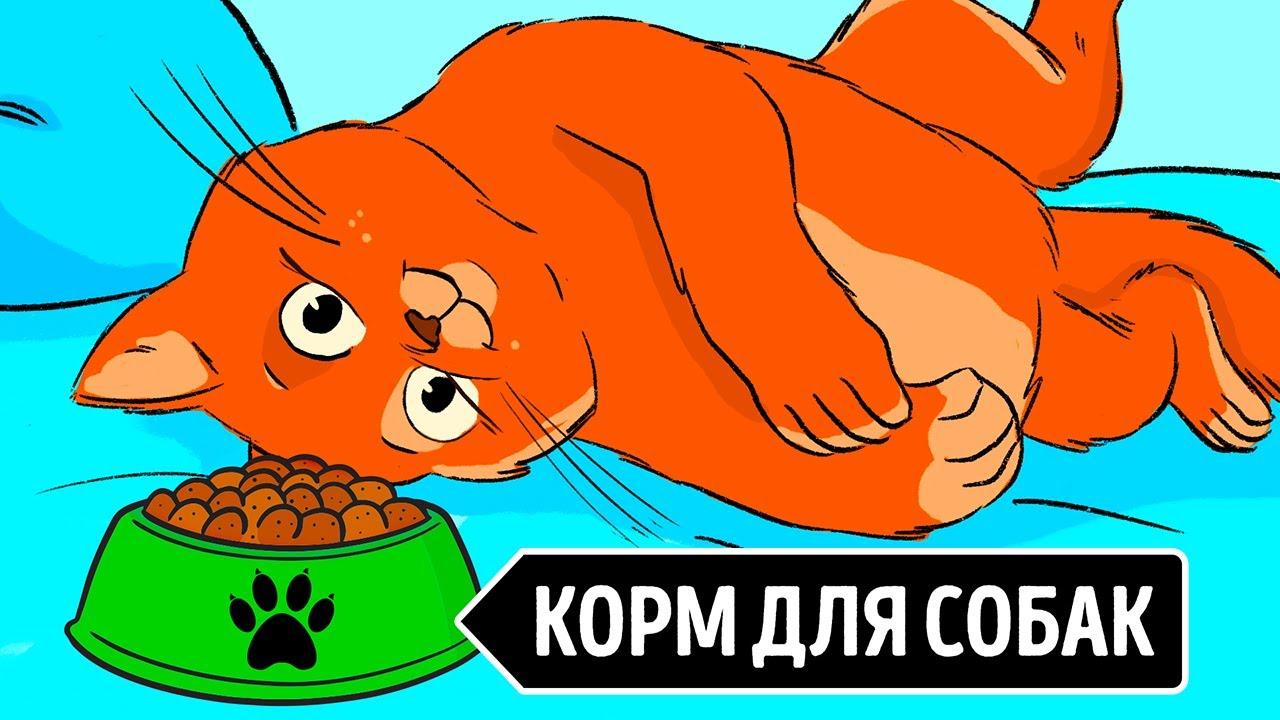 Почему кошки не могут есть корм для собак