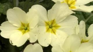 La bellezza dei fiori di primavera