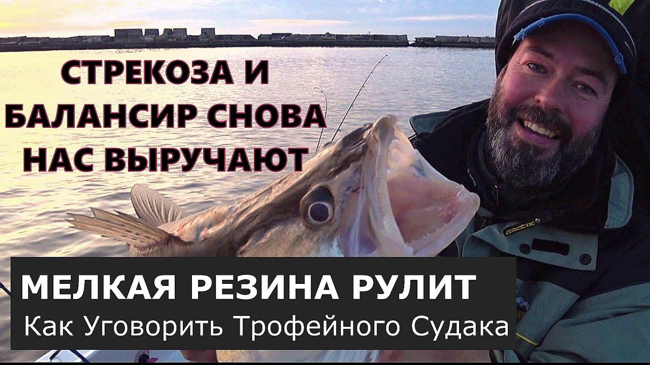 Неожиданный бонус в конце рыбалки. Жирные окуни и судак. [дроп-шот молчит].