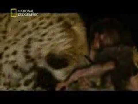Minilogue - The Leopard (extrawelt remix)