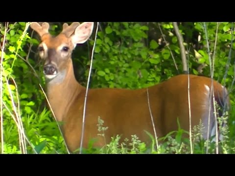 FOR KIDS Wild Animals ! All Kinds of Animals ! - YouTube