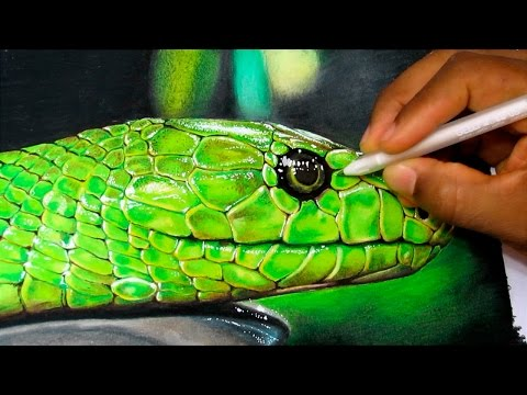 How to Draw a Realistic Snake   Time Lapse