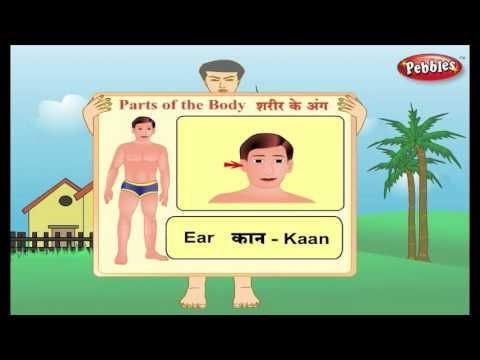 Learn Hindi Through English : Parts of the Body | Hindi Speaking | Hindi Grammar