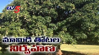 Mango Cultivation | Mango Farming Guidance | Annapurna | TV5 News