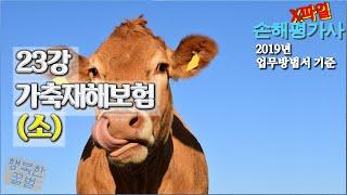 손해평가사 X파일 - 23강 가축재해보험 (소) 2019년 개정 업무방법서 기준