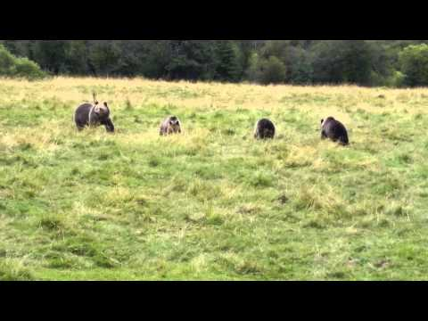 Grizzly bears calgary