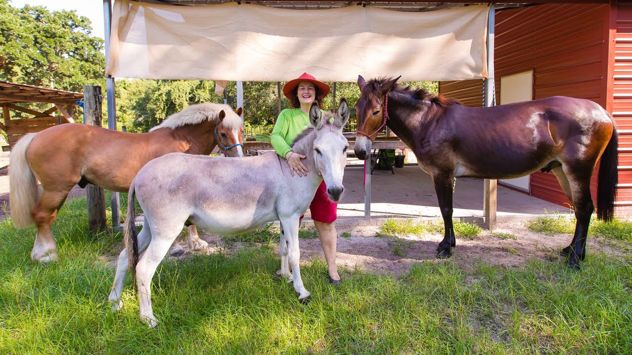 Download Ponies, Horses, Donkeys, & Mules: Everything you need to know.