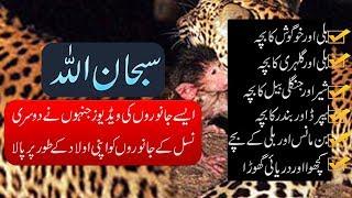 ✅ When Animals Adopt Other Animals - Purisrar Dunya - Urdu Documentaries
