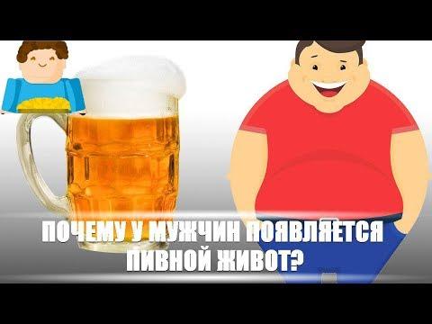 Почему у мужчин появляется пивной живот?  [Plushkin]