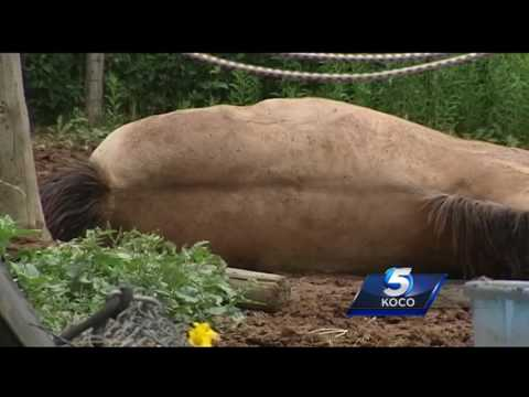 Horse stabbed to death in northwest Oklahoma City