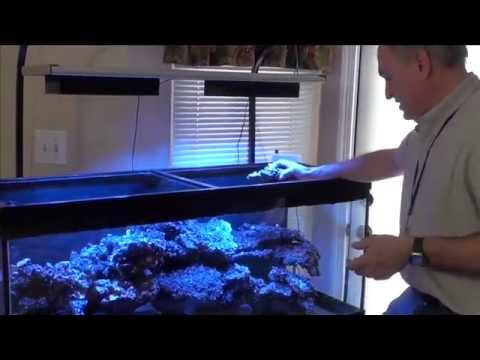 Part I - Paletta LED Experimental - Reef Video Podcast by AmericanReef - Start a Saltwater Aquarium