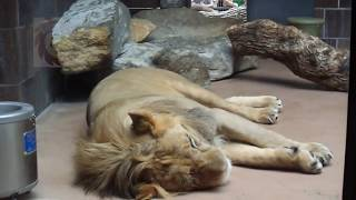 Henry Drooly Zoo[Omaha] آكبر حديقه حيوان في آمريكا