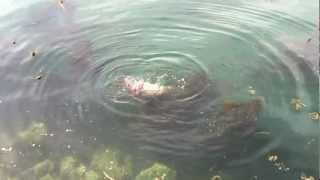 seal vs octopus at ogden point