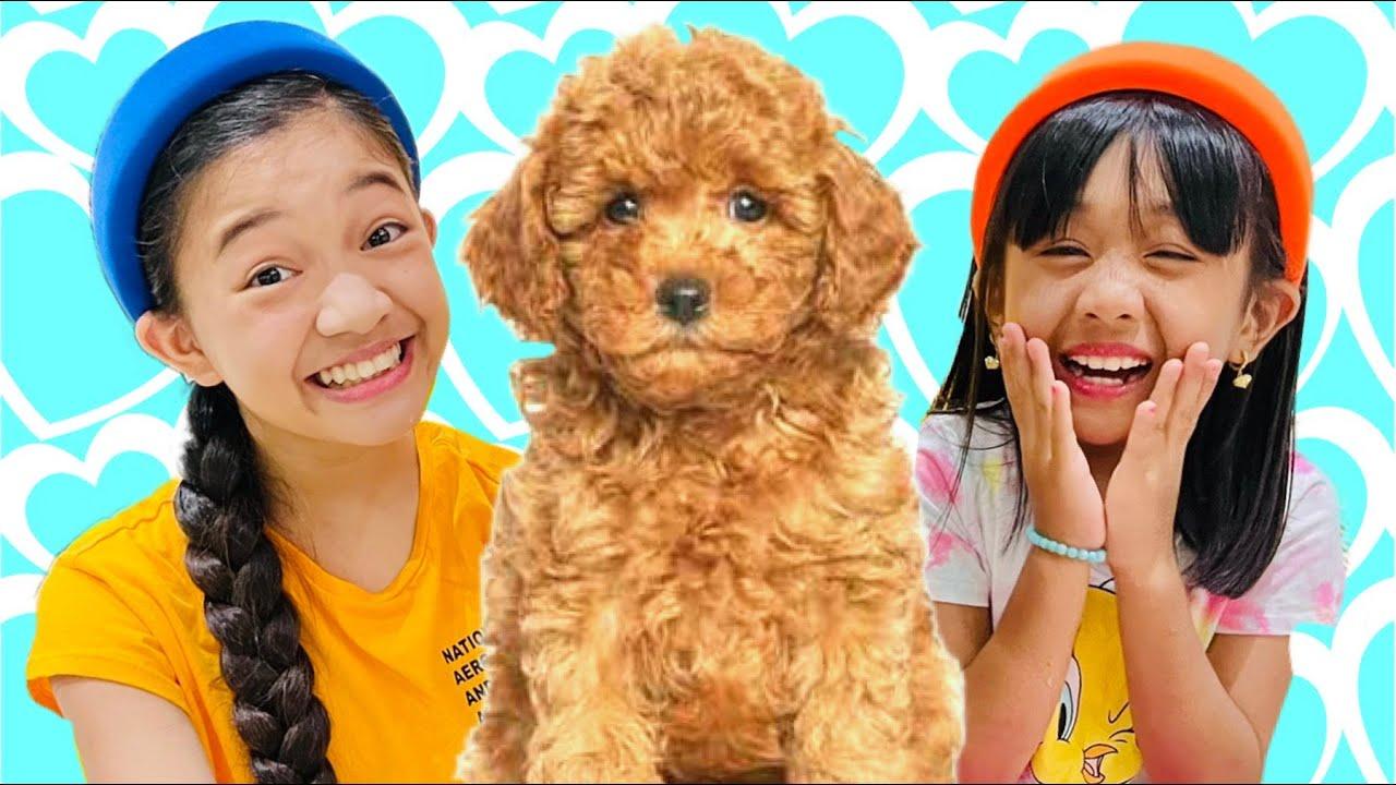 Download NEW PET DOG   KAYCEE WONDERLAND