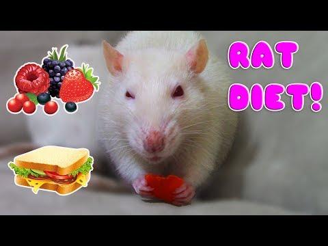 RAT DIET BASICS! (On A Budget)