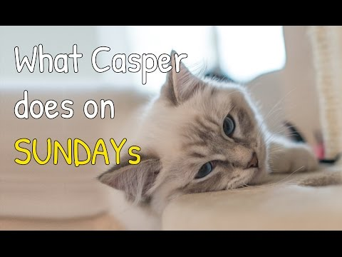 All the things Casper our ragdoll cat does on Sunday