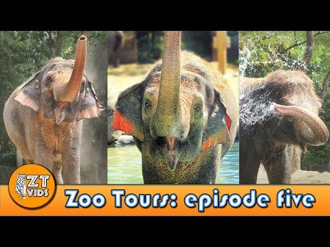 Zoo Tours Ep. 5: Cincinnati Zoo's Elephant Reserve