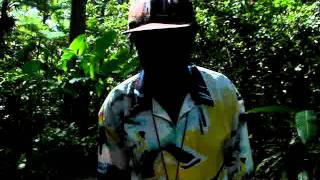 St. Lucia Diamond Falls Botanical Garden - Funny Guide