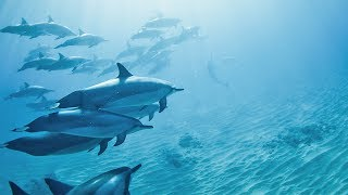 HAWAII: SWIMMING WITH DOLPHINS!!