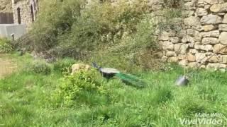 Petite visite du parc animalier d'Auvergne