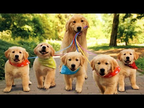 top 10 cutest pet dogs (dogs you would love to have)