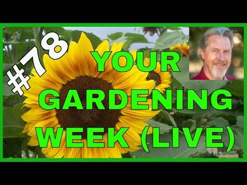Gardening in Autumn (Q&A)