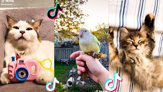10 Minutes Straight Of The Cutest Pets On Tiktok Compilation🥰 #1