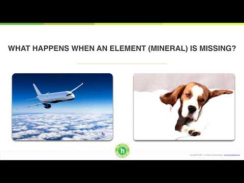 The right food and mineral supplements can keep your dog healthy | Dr. Dobias - Natural Healing