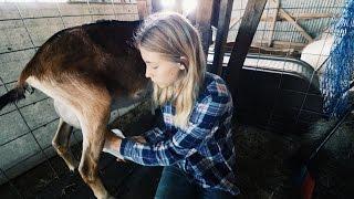 Young Girl Milks Goats To Accomplish Her Dreams
