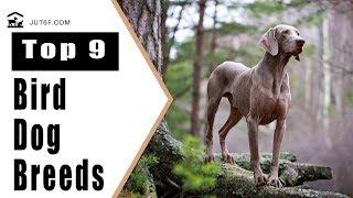 Top 9 Bird Dog Breeds