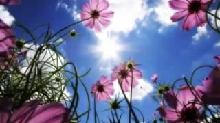 Красота моего сердца сада (music by Sri Chinmoy)