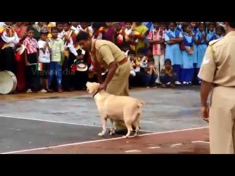 Dog show and demonstration by Kerala Police Dog Selma and Rombo
