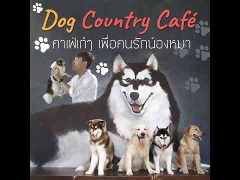 Dog Country Café : คาเฟ่เก๋ๆ เพื่อคนรักน้องหมา