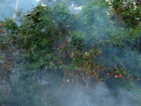 Amazônia em chamas na BR 158