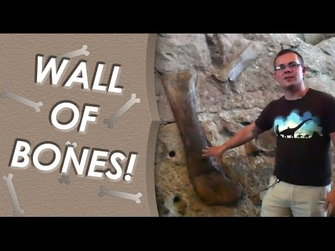 The Real Jurassic Park: Carnegie Quarry at Dinosaur National Monument