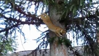 Treetop Tabby