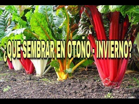 Que sembrar en oto o invierno pte 1 manos de tierra for Arboles para plantar en invierno